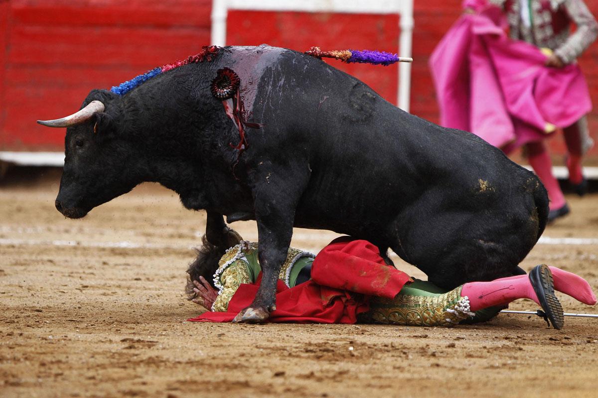 Conversación Real 8: Corridas de toros y Derechos de Animales