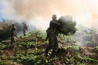 Conversacion en ingles: La Guerra contra las drogas
