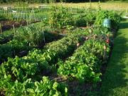 La horticultura: Vocabulario en inglés (vegetable gardening)