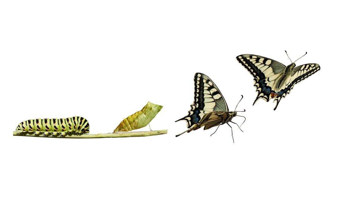 Inglés Vocabulario y Pronunciación 3.11 - Discutiendo cambios de la vida