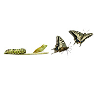 Descargar Ebooks - Vocabulario y Pronunciación 3.11 - Discutiendo cambios de la vida