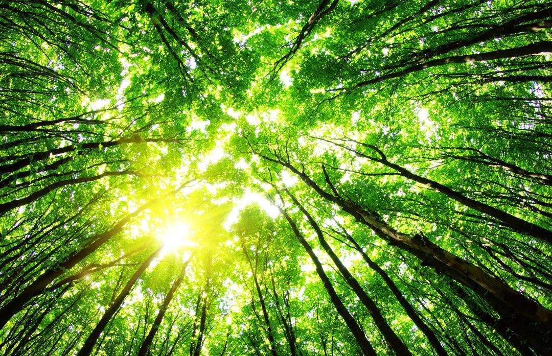 Inglés Vocabulario y Pronunciación 3.31 - El Medio Ambiente