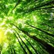 Zapp! Inglés Vocabulario y Pronunciación 3.31 – El Medio Ambiente